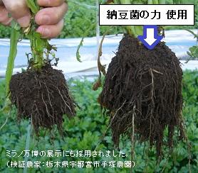 納豆菌の力使用